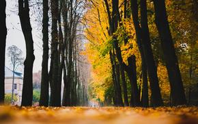 follaje, otoño, casa, CALLEJÓN, carretera, Fallen, árboles, amarillo