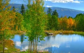 科罗拉多州, 池塘, 池塘, 秋, 树, 景观
