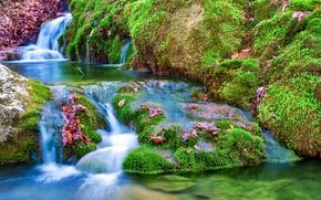 piedras, musgo, follaje, pequeño río