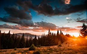 forest, landscape, beauty, nature, Mountains, Ukraine, Carpathians
