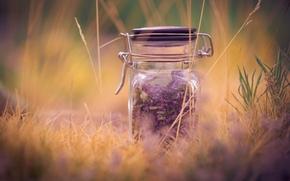 фон, растение, размытие, макро, фиолетовый, трава, полноэкранные, широкоформатные, лаванда, широкоэкранные, баночка, настроения, обои, банка