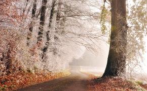 Frost, Straße, Bäume