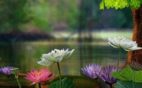 睡莲, 莲花, 树, 叶子