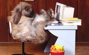 conejo, lugar de trabajo, ordenador, oficina