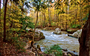 forest, river, autumn, trees, nature