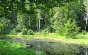 лес, пруд, деревья, природа