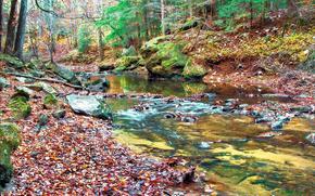 floresta, rio, pedras, natureza