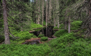 foresta, pond, alberi, natura