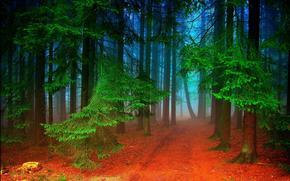 foresta, stradale, alberi, nebbia, natura