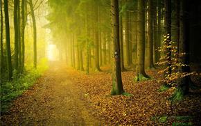 лес, деревья, дорога, туман, природа