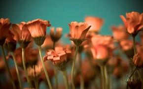 fullscreen, flores, fondo, papel pintado, Widescreen, Widescreen, Flores, tallo, naranja