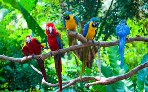 FILIALE, uccelli, Pappagalli, verdi