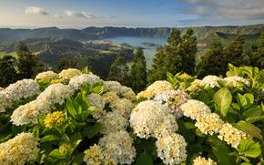 Азорские острова, Португалия, Понта-Делгада, горы, Моштейруш, цветы, гортензии