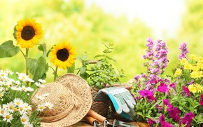 hat, gloves, camomile, sunflower, degradation, flowers, background, Mood, Flowers, fullscreen, Widescreen, Chamomile, wallpaper, Widescreen
