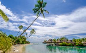 houses, tropics, beach, Palms, sea