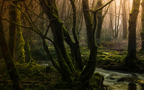 forest, trees, creek, moss