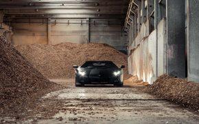 plant, Lamborghini, black