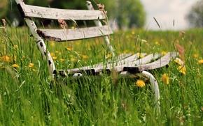 wallpaper, Widescreen, VEGETATION, Flowers, flowers, bench, background, greens, fullscreen, Widescreen, Mood, shop, grass, A bench, bench