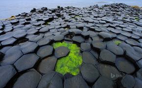 dam, ALGAE, sea, Northern Ireland