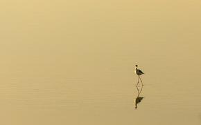 natura, uccello, minimalismo