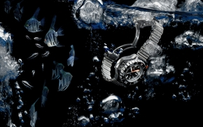 hallo-Tech-, beobachten, Wasser, Fisch, Angelfish