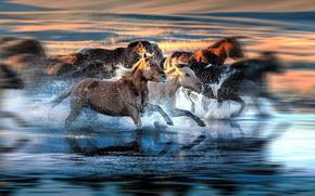 funcionamiento, manada, spray, degradación, caballo