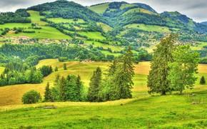 campo, alberi, Colline, domestico, paesaggio