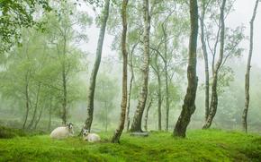 树, 林间空地, 羊, 性质