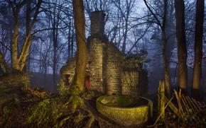 лес, туман, вечер, закат, руины, пейзаж