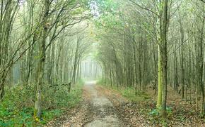 foresta, alberi, nebbia, stradale, natura
