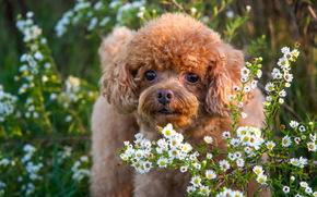 friend, view, Flowers, dog
