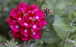 макро, фото, цветы