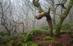 forest, trees, fog, stones, moss, nature