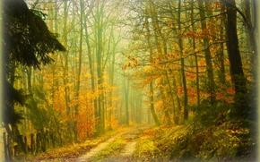 outono, floresta, estrada, árvores, natureza, nevoeiro
