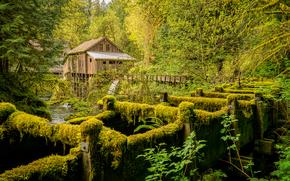 雪松溪谷磨坊, 华盛顿州, 河, 磨, 树, 景观