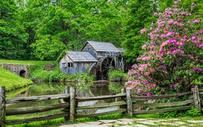 río, bosque, árboles, molino de agua, valla, paisaje
