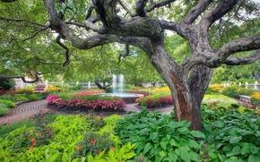 garden, park, FOUNTAIN, trees, landscape