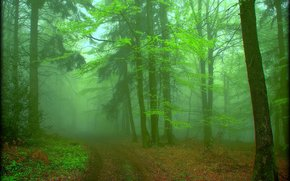 forest, fog, trees, nature, road