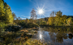 See, Wald, Sommer, Spiegelbild