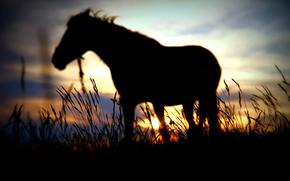 силуэт, лошадь, солнце, размытие, закат