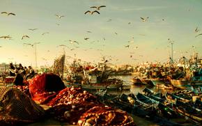 pescatori, net, Marocco, rybatsie, porto, Imbarcazione, GABBIANI, uccelli, mattinata, Essaouira