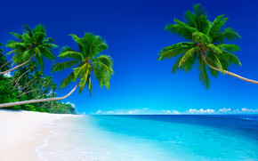 Palm Beach, morze, Brzeg, Palms, tapeta