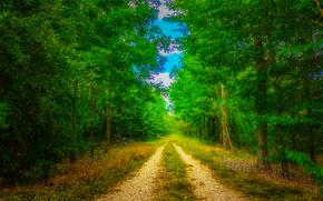 森林, 道路, 树, 雨, 性质