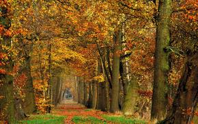 foresta, alberi, stradale, natura