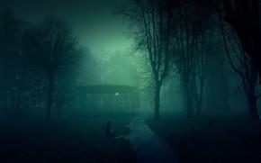 деревья, мрачно, настроения, Туман, ночь, парк