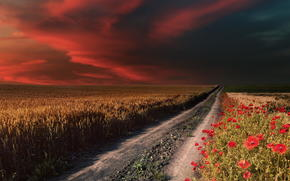 field, road, Poppies, sky