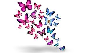 blue, pink, Butterflies