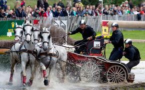 конный спорт, соревнования конных упряжек, Драйвинг, четверик