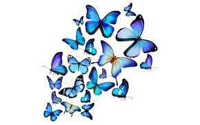 Butterflies, blue