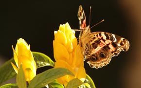 farfalla, Fiori, giallo, sfondo, fogliame
